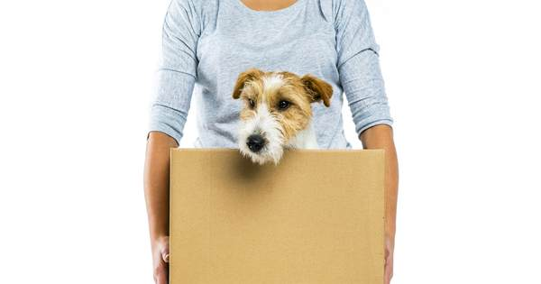 Tips to Make Moving Easier on Your Dog